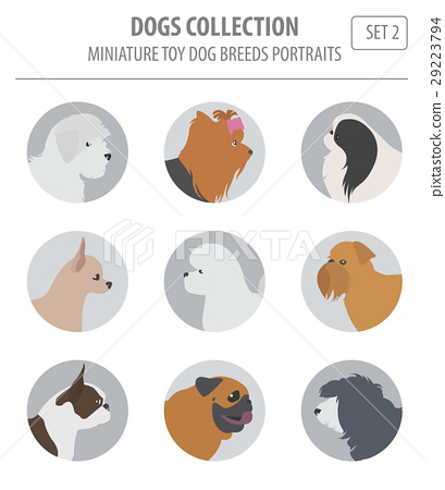 Miniature toy dog breeds collection isolated 29223794
