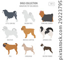 Miniature toy dog breeds collection isolated  29223795