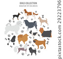 Miniature toy dog breeds collection isolated  29223796