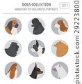 Miniature toy dog breeds collection isolated  29223800