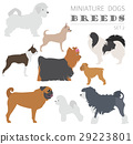 Miniature toy dog breeds collection isolated  29223801