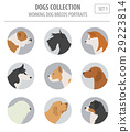 Working (watching) dog breeds collection isolated  29223814