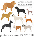 Working (watching) dog breeds collection isolated  29223818