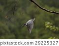wild bird, bird, birds 29225327