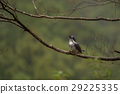 wild bird, bird, birds 29225335