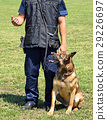 police, dog, officer 29226697
