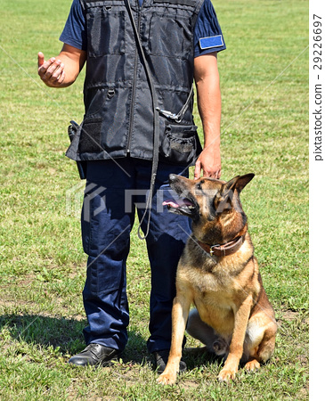 Police man with his dog 29226697