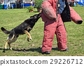 Police dog in training 29226712