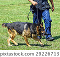 police, dog, officer 29226713