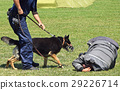 Police man and his dog 29226714