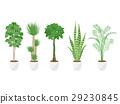 관엽 식물, 식물, 화분 29230845