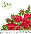 現實主義 玫瑰 玫瑰花 29231600
