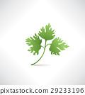 Fresh green parsley isolated. Salad healthy food 29233196