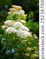 花 花朵 花卉 29236760