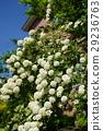 花 花朵 花卉 29236763
