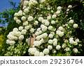 花 花朵 花卉 29236764