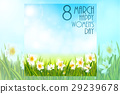 Spring background with daffodil narcissus flowers 29239678