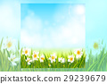 Spring background with daffodil narcissus flowers 29239679