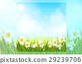 Spring background with daffodil narcissus flowers 29239706