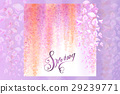 Spring background with blooming wisteria 29239771