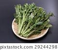 야채, 채소, 잎채소 29244298