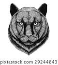 Panther Puma Cougar Wild cat c 29244843