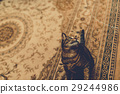 cat, pussy, house 29244986
