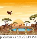 场景 景色 动物 29249358