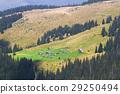 spruce, nature, mountain 29250494