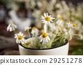 flower, herb, mortar 29251278