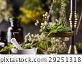 alternative, herb, medicine 29251318