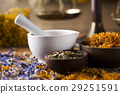alternative, flower, herb 29251591