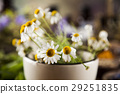 flower, herb, mortar 29251835