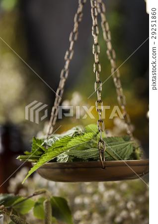 Fresh medicinal, healing herbs on wooden 29251860