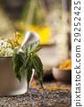 flower, herb, medicine 29252425