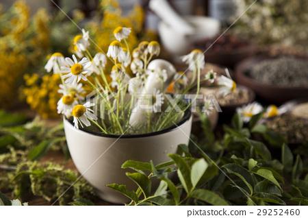 Alternative medicine, dried herbs and mortar  29252460