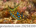 海参 水下照片 海底的 29256399