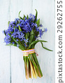 Bouquet of spring blue muscari 29262755
