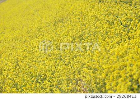 꽃, 플라워, 봄 29268413