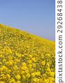 花朵 花 花卉 29268438