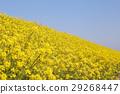 花朵 花 花卉 29268447