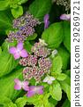 花 花朵 花卉 29269721