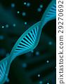 DNA chain macroshot 29270692
