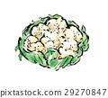 cauliflower, cauliflowers, vegetables 29270847