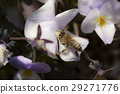 蜜蜂+ビオラ 29271776
