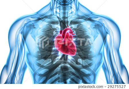 3D illustration of Heart, medical concept. 29275527
