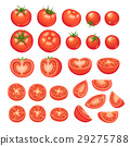 tomatoes collection isolated 29275788