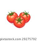 西紅柿 番茄 向量 29275792