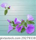 Violet flowers. 29279338