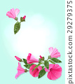 Pink flowers. 29279375
